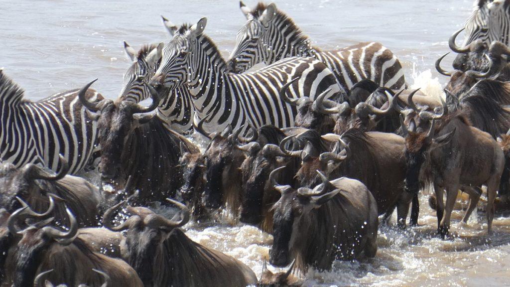 アフリカに行くと人生観が変わりますか?